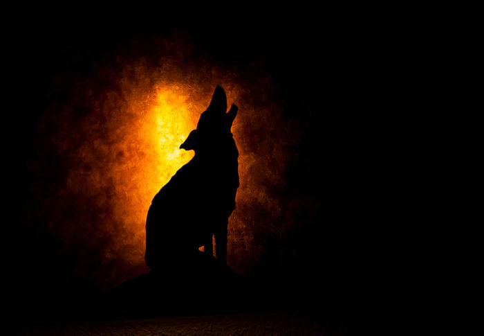 Calling! Animal Burning Dark Background Darkness And Light Flame Heat - Temperature Night Silhouette Wolf Wolf Howling