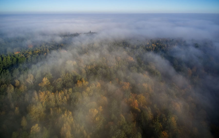 Aerial View Beauty In Nature Cloud - Sky Day Environment Fog Forest High Angle View Landscape Nature No People Non-urban Scene Outdoors Plant Scenics - Nature Sky Tranquil Scene Tranquility Tree