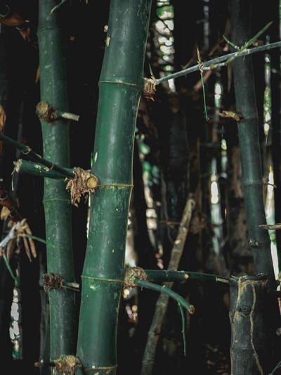 กอไผ่ Green Color No People Plant Close-up Nature Full Frame Growth Metal Security Outdoors Day Focus On Foreground Bamboo Leaf Sunlight Protection Bamboo - Plant Fence Backgrounds Plant Part