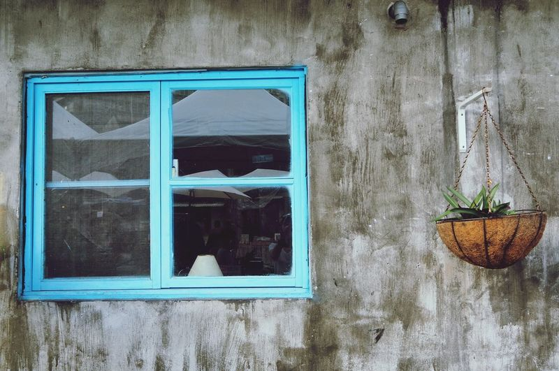 Window Architecture Streetphoto Bluewindow Hanging Plants Graywall Wall Outdoors Taiwan Taipei,Taiwan Taiwan Style Taiwan Trip