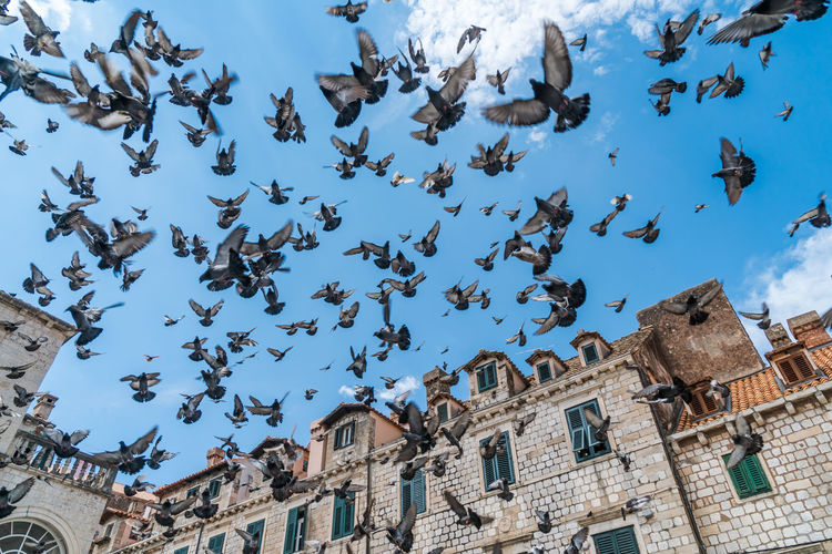 Low Angle View Of Pigeons Against Sky