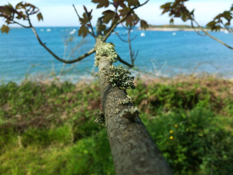 Lichen Tree Trees Water Ocean Sea Leaves Boats Coast French Coast