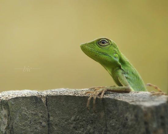 thinking of you Animal Wildlife Reptile Animals In The Wild Lizard Animal Themes Day Chameleon Outdoors Nature Close-up Iguana Macro Beauty In Nature Nature Animals In The Wild