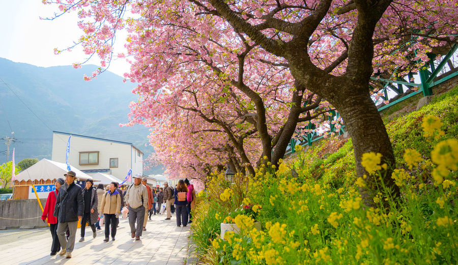 Group of people walking on cherry blossom tree