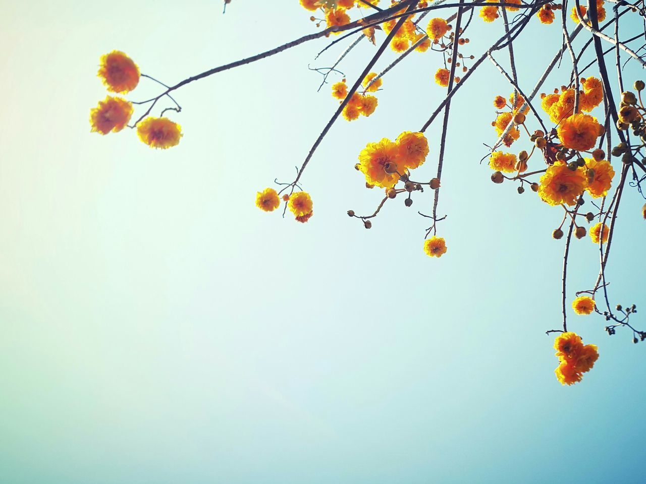 nature, beauty in nature, low angle view, growth, autumn, tree, leaf, no people, outdoors, day, flower, sky, yellow, clear sky, branch, fragility, tranquility, freshness, scenics, close-up
