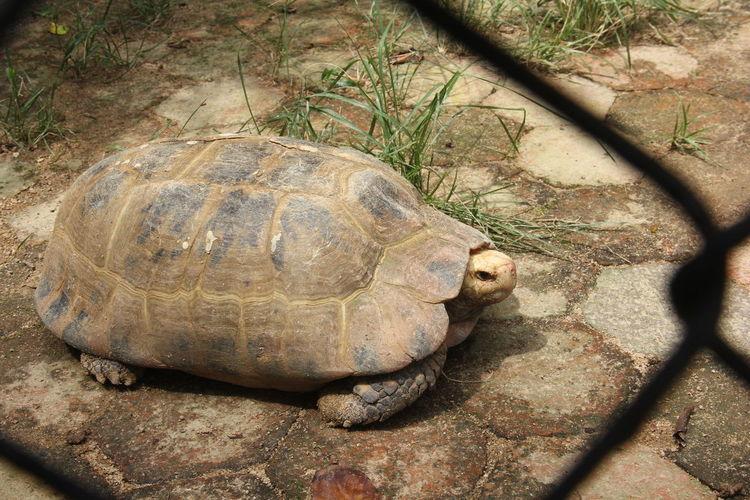 Wildlife in Zoo