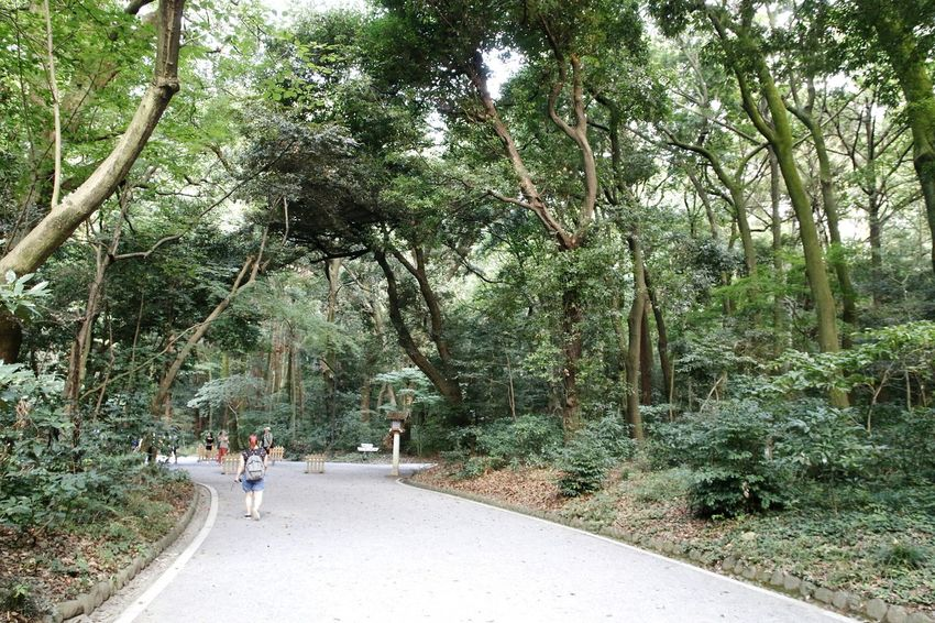 Nature Forest Trees Forestwalk Forest View Meiji-Jingu Meiji Jingu 日本国 Tokyo, Japan Tokyo Japan Photography Nippon Trees Trees And Nature Nippon Photography Forest Path Japan 渋谷区 Treescollection Nature Forest Photography Meiji Shrine Meijijingu Tokyo,Japan Tree Tree