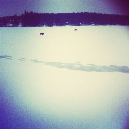 À walk on the lake Whit à friend and My Two dogs to day Hanging Out
