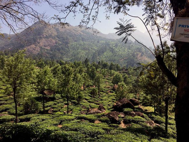 Munnar, India India Indian Munnar Munnar Kerala Tea Tea Plant Tea Plantation  Tea Plantation Terrace