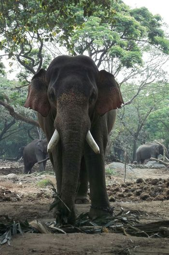 Animal standing on rock