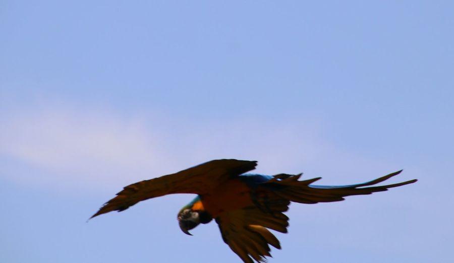Vogel Himmel