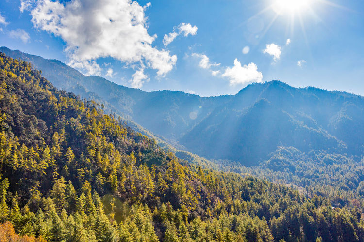 ASIA Beauty In Nature Bhutan Bright Cloud - Sky Coniferous Tree Day Environment Forest Idyllic Land Landscape Mountain Mountain Range Nature No People Non-urban Scene Outdoors Plant Scenics - Nature Sky Sunlight Tranquil Scene Tranquility Tree