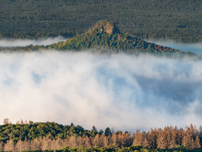 Zirkelstein in mist. autumn fog above trees, white waves. fall valley of saxony switzerland, germany