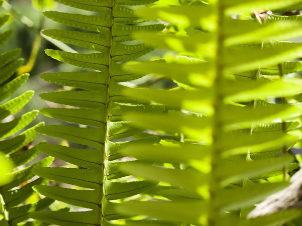 Backgrounds Beauty In Nature Close-up Day Ferm Focus On Foreground Full Frame Green Green Color Growth Leaf Leaf Vein Leaves Natural Pattern Nature No People Outdoors Plant Selective Focus Tranquility