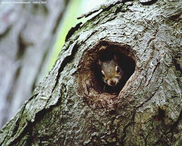 Tree AnimaLs <3 Animals Naturelovers
