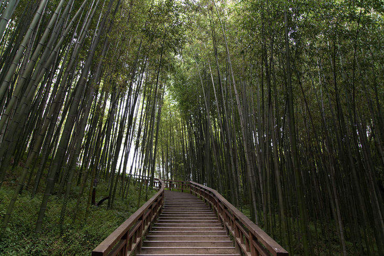 Juknokwon, the famous bamboo park in Damyang, Jeonnam, South Korea Damyang Juknokwon Stairway Bamboo - Plant Bamboo Forest Bamboo Grove Bamboo Park Beauty In Nature Day Forest Green Color Growth Nature No People Outdoors Scenics The Way Forward Tranquil Scene Tranquility Tree