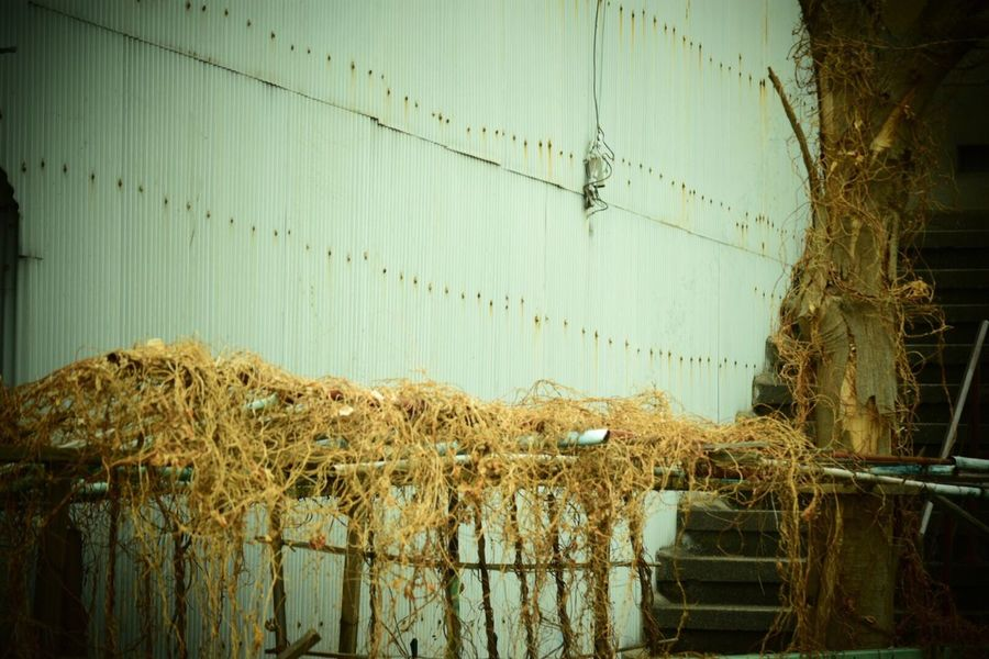 Streetphotography Built Structure Building Exterior Beauty In Nature 生きる Life Force