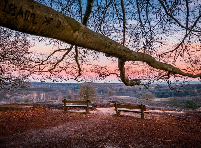 Viewpoint from under the big tree Colorful View Into Land Viewpoint Sky Park Bench Bench Sunset Orange Color Tranquil Scene Tranquility Scenics Park Seat Idyllic