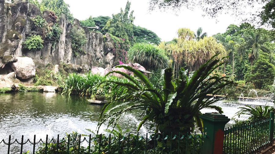At Ragunan Zoo. All About Running By ITag View By ITag A Place By ITag Nature By ITag