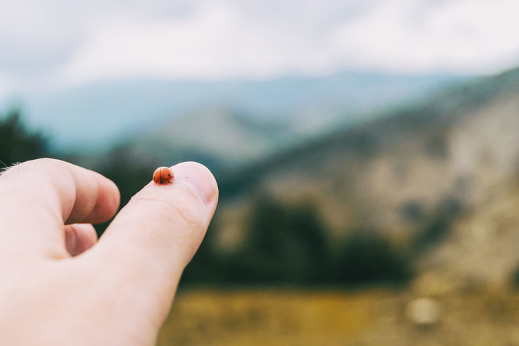 Little ladybug perched on the thumb skin of a girl's hand in nature