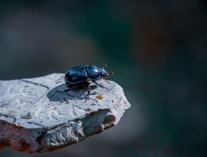 High angle view of beetle on a rock
