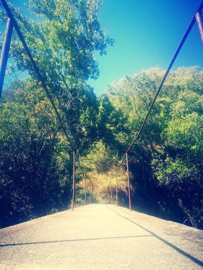 Green Color Erva Verde Bridge Tree Sky Growing Empty Road