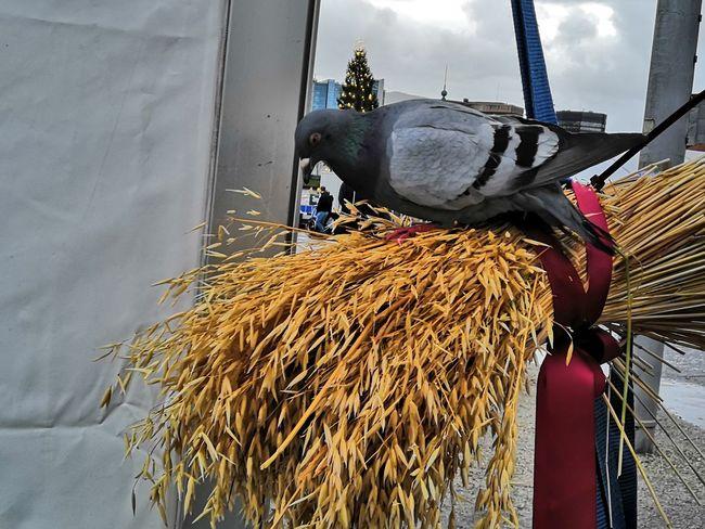 Food for all Pidgeon  Food Christmastime Christmas Christmas Sheaves Sheaves Holiday Moments