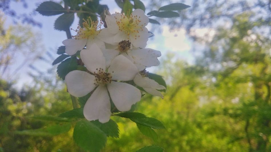 Flower Head Flower Springtime Tree Close-up Sky Plant Plant Life In Bloom Bud Apple Blossom Stem Apple Tree Flowering Plant Botany Blooming Pollen Petal Wildflower Blossom Pistil Fruit Tree
