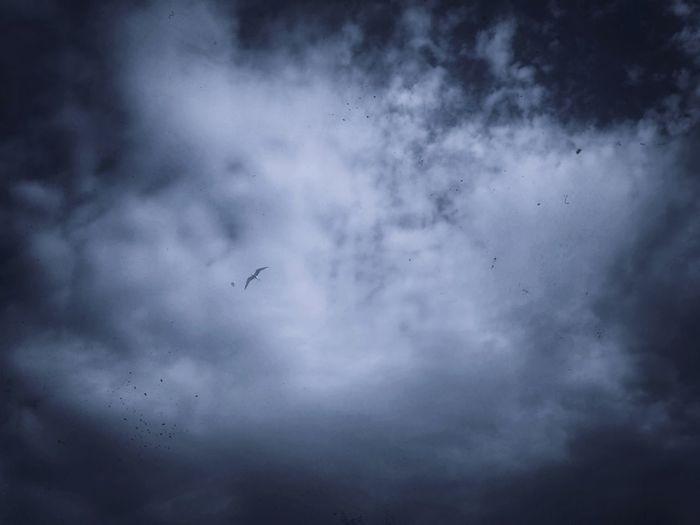 Sky Sky Skyscraper Bird Seagull Blue Blue Sky
