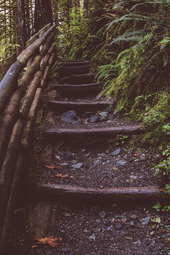Staircase in forest