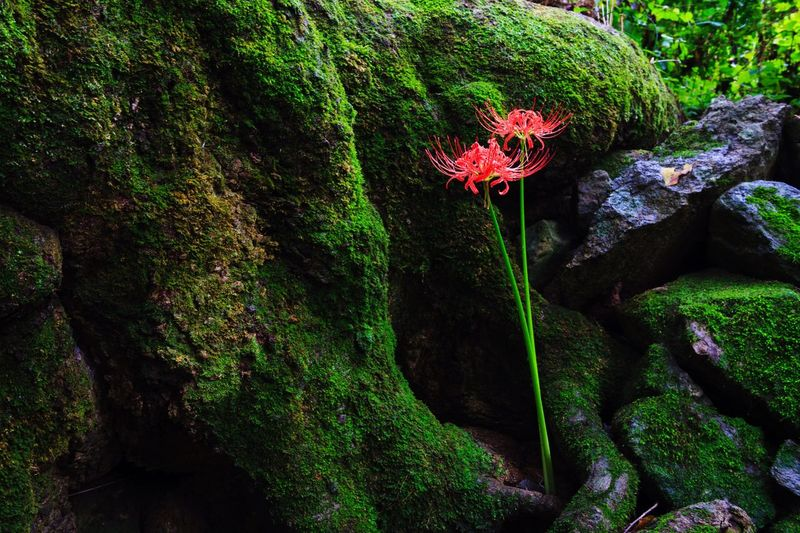Tranquility Beauty In Nature Rock - Object Nature EyeEm Nature Lover EyeEmNewHere Flower Outdoors Plant