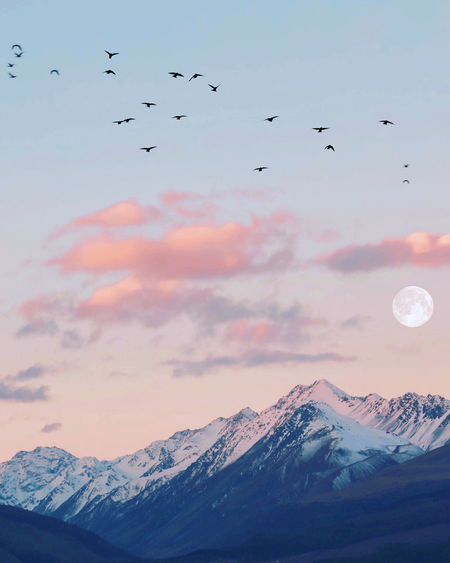 Flock of birds flying over snowcapped mountains against sky