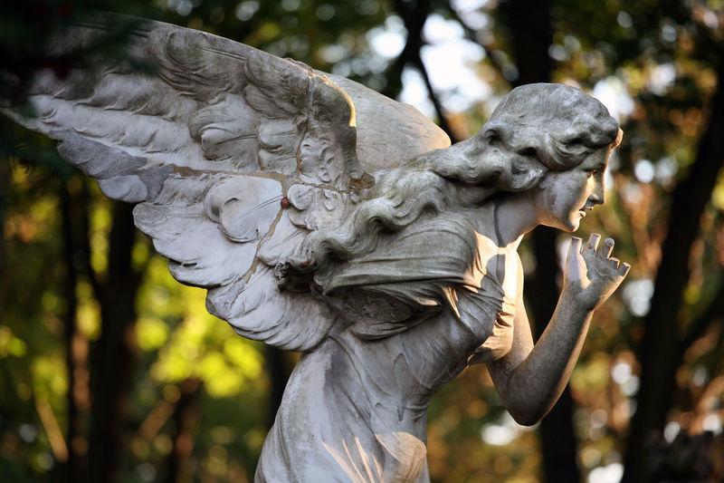 Powazkowki Cemetery, Warsaw, Poland Angel Autumn Cemetery Cmentarz Powązki Powązki Powązkowski Sculpture Statue Tombstone Varsowia Warsaw Warszawa  Wings