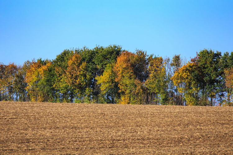 Trees against sky during autumn