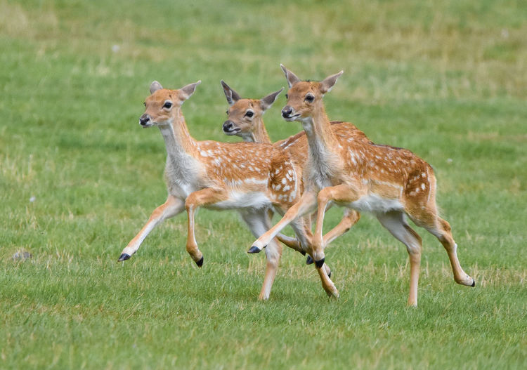 Deer Nature Wildlife & Nature Animal Themes Animal Wildlife Animals In The Wild Day Field Full Length Grass Mammal Nature No People Outdoors Wildlife