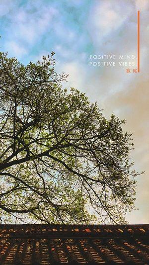 寂侘 Tree Sky No