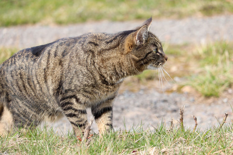 Side view of a cat on field
