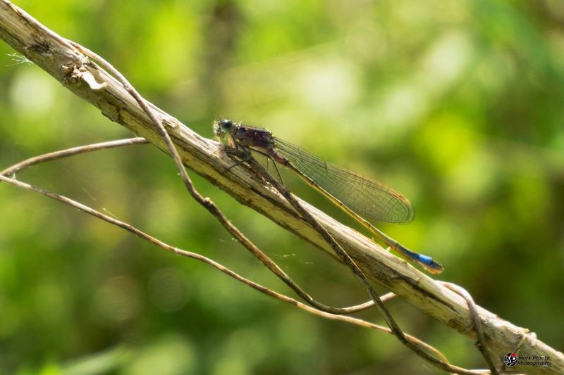 Animal Themes Animals In The Wild One Animal Insect Day Focus On Foreground Animal Wildlife Damselfly Nature First Eyeem Photo Plant Outdoors Libelle Green Color Nature Animals In The Wild Green Color No People Leaf Close-up