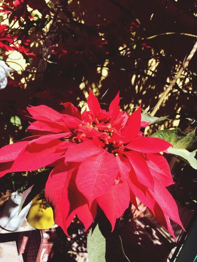 Tradition Mexican Colors Colorful Plant Tree Nature Beauty In Nature Plant Part Close-up Red Outdoors Growth