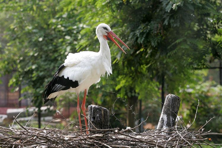 Hyderabad India Animal Animal Themes Animal Wildlife Animals In The Wild Beak Bird Day Focus On Foreground Land Nature No People One Animal Outdoors Perching Plant Stork Tree Vertebrate White Color White Stork