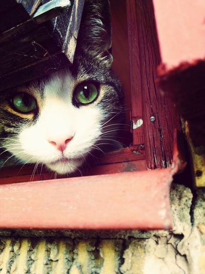 Are you done yet?! I wanna play with you.♥ My Cutie Pie Cat Watching Hello World Love
