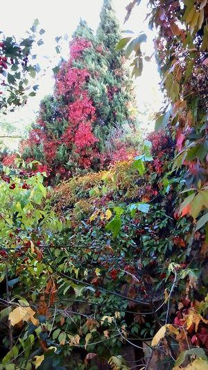 Hojas Y Ramas Hojas De Otoño Hojas De Colores Hojas De árbol Bosquemagico Bosque De La Hoja Colorfull Colors Colores De Otoño Colores De La Naturaleza Colores Colores Y Texturas