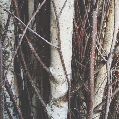 Twigs and sticks Birch Birch Wood Florist Bundle Of Sticks Twigs And Branches Bundle Of Branches IPhoneography IPhone Iphoneonly