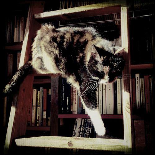 Cat Monochrome Sleeping Cat