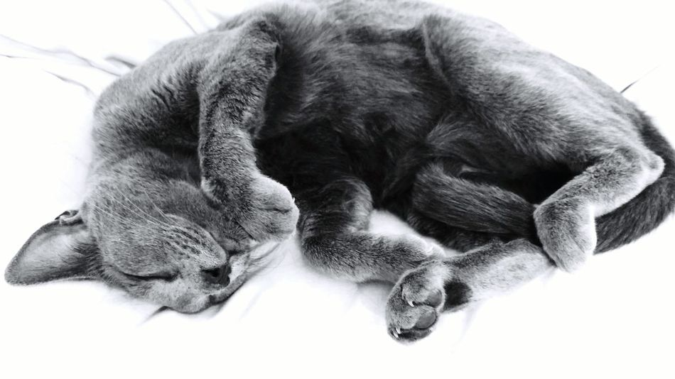 Lying Down Animal One Animal Relaxation No People Animal Themes Pets Close-up Indoors  Catsoftheworld Sleeping Cat Relaxing Cat EyeEmNewHere Newest Talent Best Photos