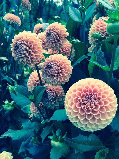 Flower perfection dream