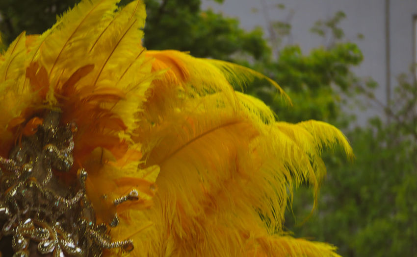 Feather  Headpiece Yellow Close-up My Best Photo