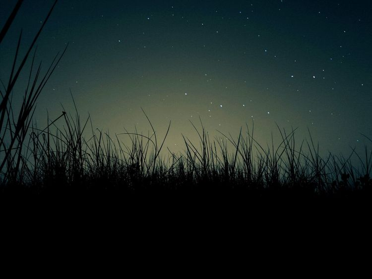 love with the graas.& starsNature Tree Sky Beauty In Nature Sunset Outdoors Tranquility Growth Silhouette Field No People Star - Space Night Astronomy Beauty In Nature Low Angle View Tail Grass Nature Milky Way Star Field Nightphotography Galaxy Close-up Sun Mobile_photographer