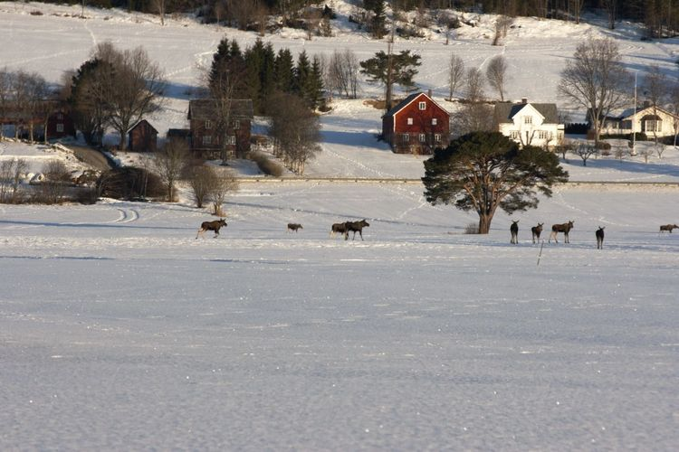 Mammals on snow covered field