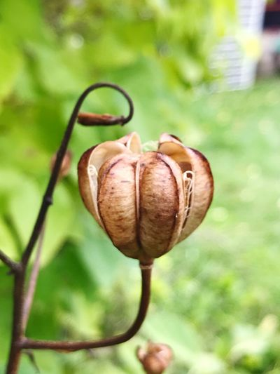 Close-up of orange on plant